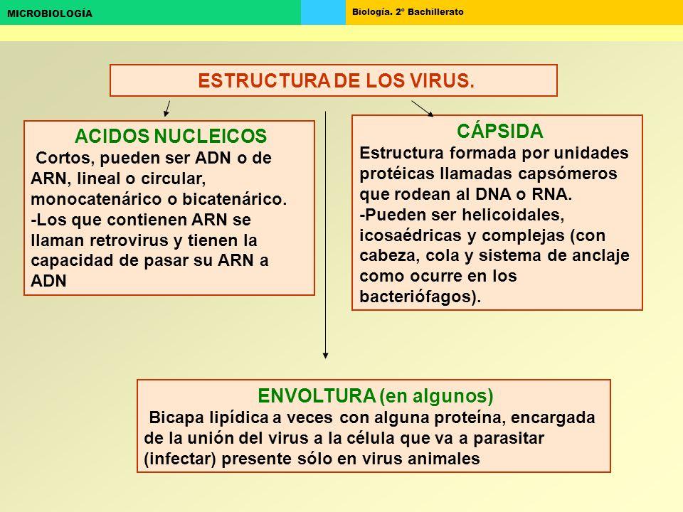 ESTRUCTURA DE LOS VIRUS. ENVOLTURA (en algunos)