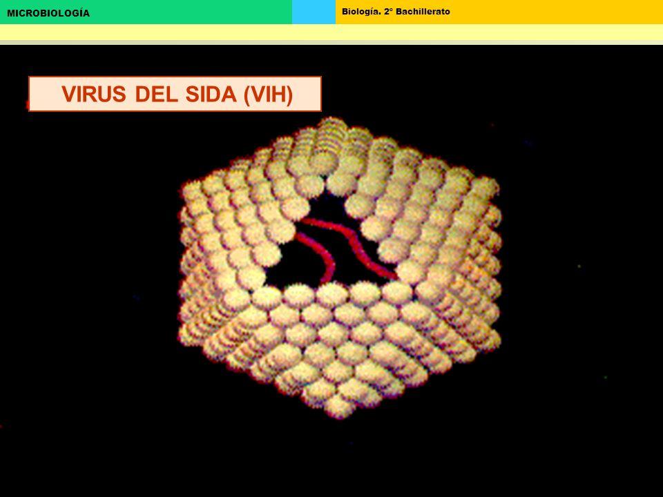 VIRUS DEL SIDA (VIH)