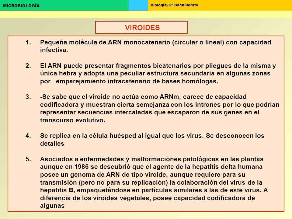 VIROIDES Pequeña molécula de ARN monocatenario (circular o lineal) con capacidad infectiva.