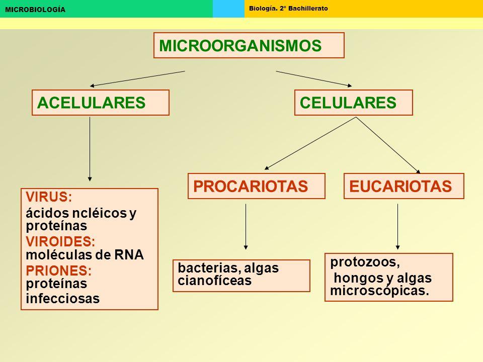 MICROORGANISMOS ACELULARES CELULARES PROCARIOTAS EUCARIOTAS VIRUS: