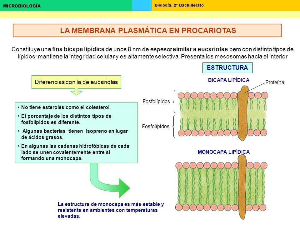 LA MEMBRANA PLASMÁTICA EN PROCARIOTAS