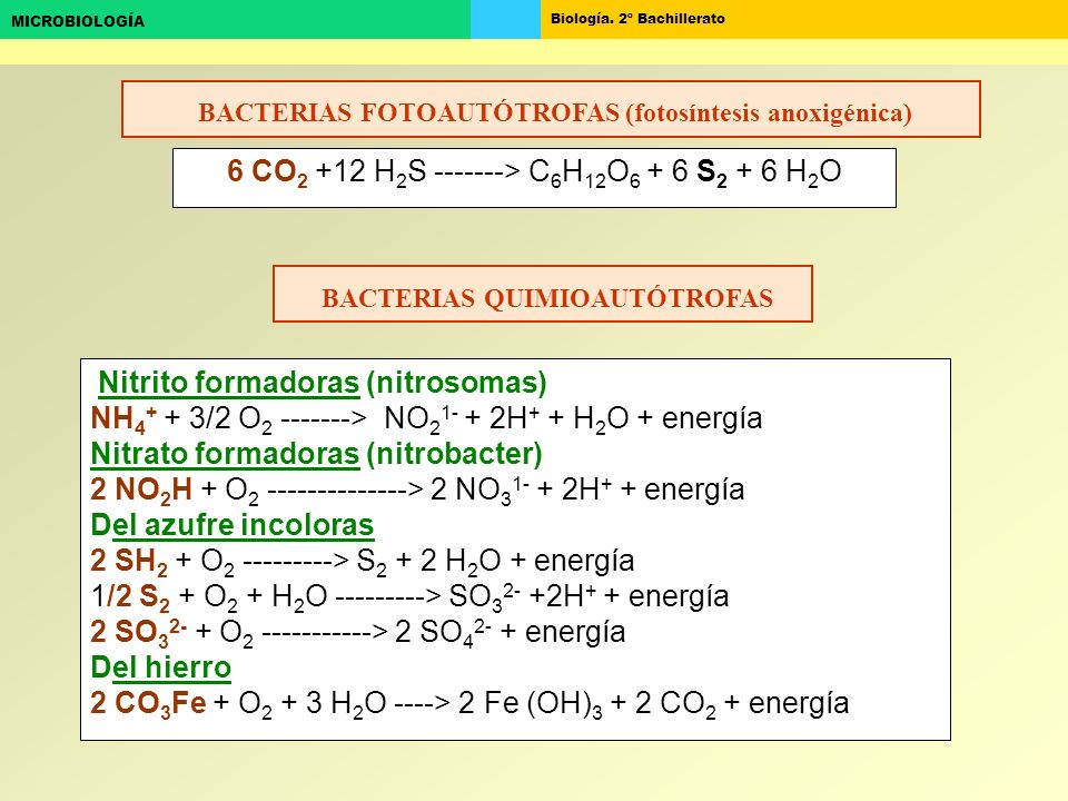 BACTERIAS FOTOAUTÓTROFAS (fotosíntesis anoxigénica)