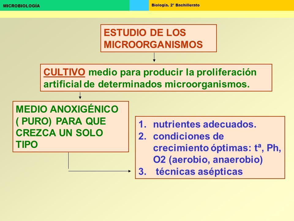 ESTUDIO DE LOS MICROORGANISMOS