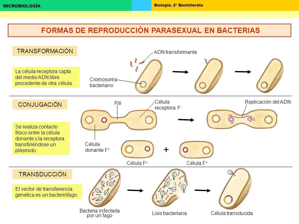 FORMAS DE REPRODUCCIÓN PARASEXUAL EN BACTERIAS