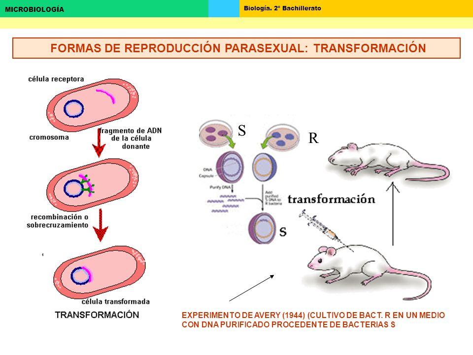 FORMAS DE REPRODUCCIÓN PARASEXUAL: TRANSFORMACIÓN