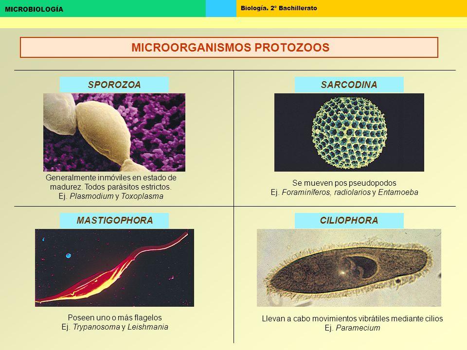 MICROORGANISMOS PROTOZOOS