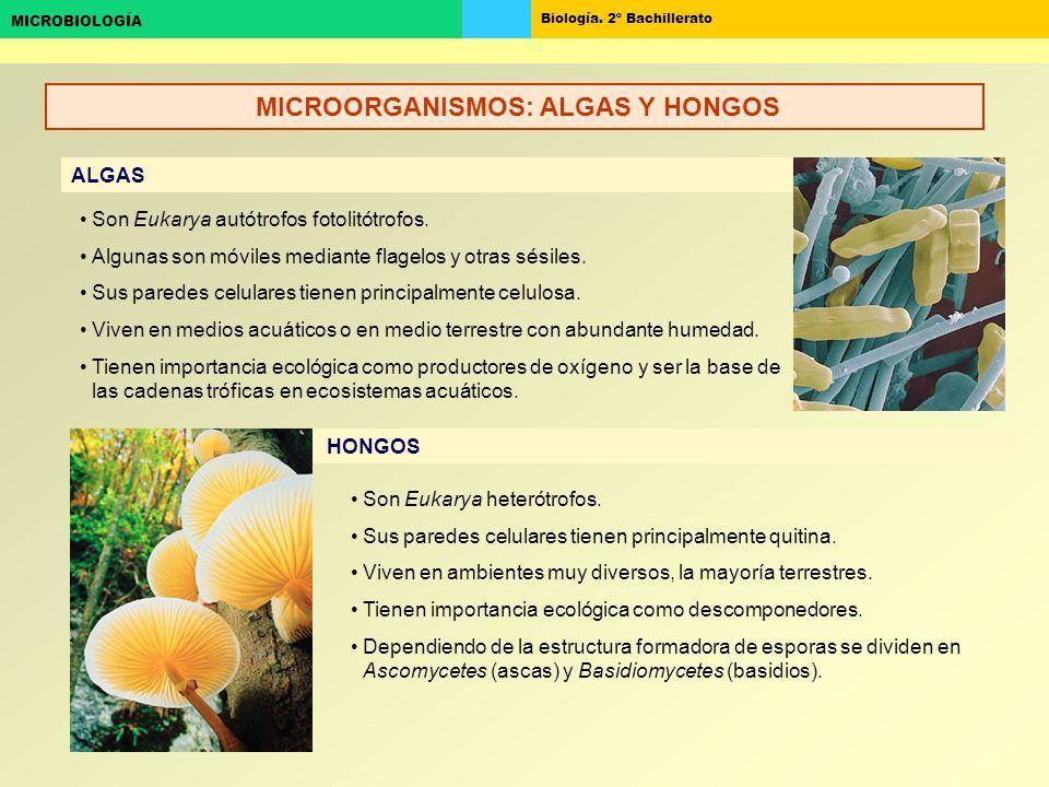 MICROORGANISMOS: ALGAS Y HONGOS