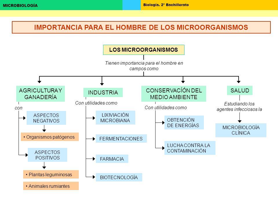 IMPORTANCIA PARA EL HOMBRE DE LOS MICROORGANISMOS