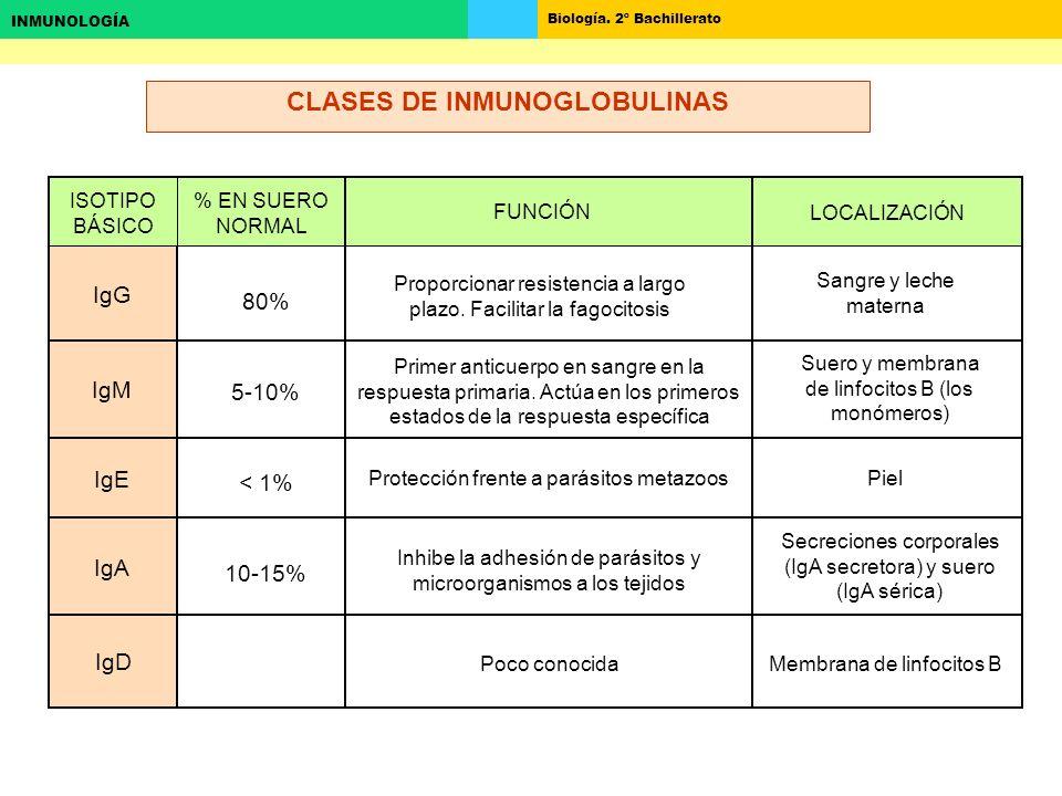 CLASES DE INMUNOGLOBULINAS