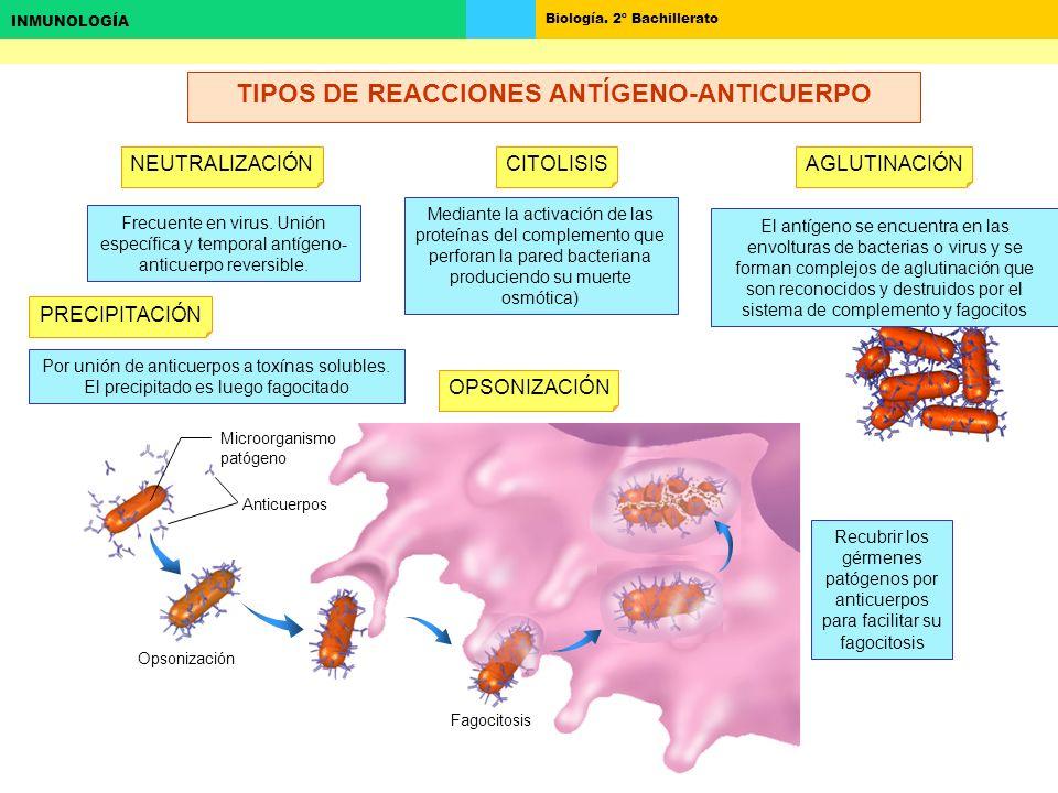 TIPOS DE REACCIONES ANTÍGENO-ANTICUERPO