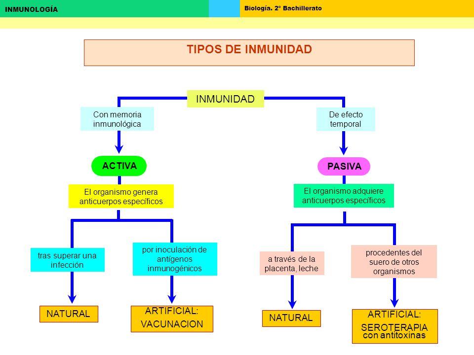 TIPOS DE INMUNIDAD INMUNIDAD ACTIVA PASIVA NATURAL ARTIFICIAL:
