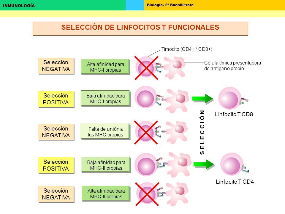 SELECCIÓN DE LINFOCITOS T FUNCIONALES