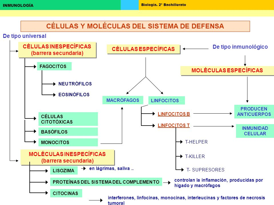 CÉLULAS Y MOLÉCULAS DEL SISTEMA DE DEFENSA
