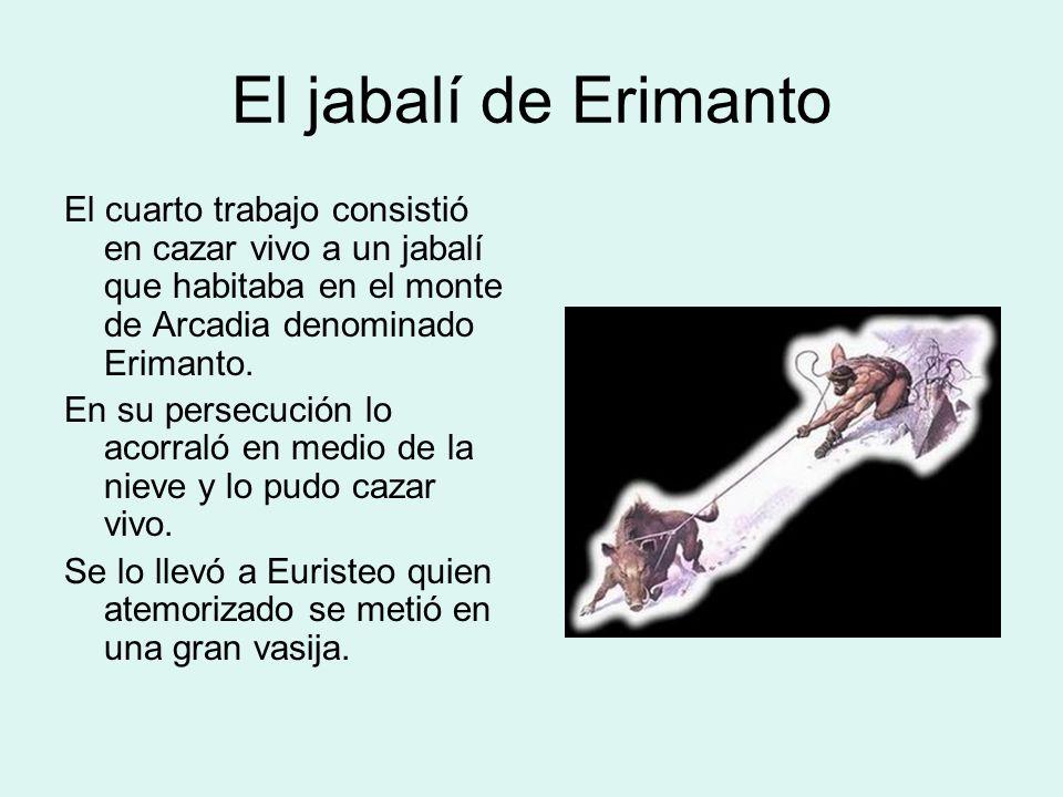 El jabalí de Erimanto El cuarto trabajo consistió en cazar vivo a un jabalí que habitaba en el monte de Arcadia denominado Erimanto.