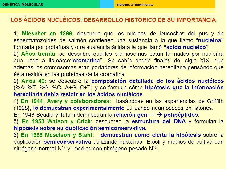 LOS ÁCIDOS NUCLÉICOS: DESARROLLO HISTORICO DE SU IMPORTANCIA