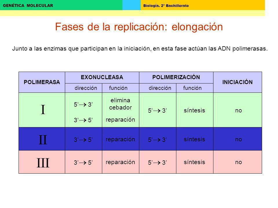 Fases de la replicación: elongación