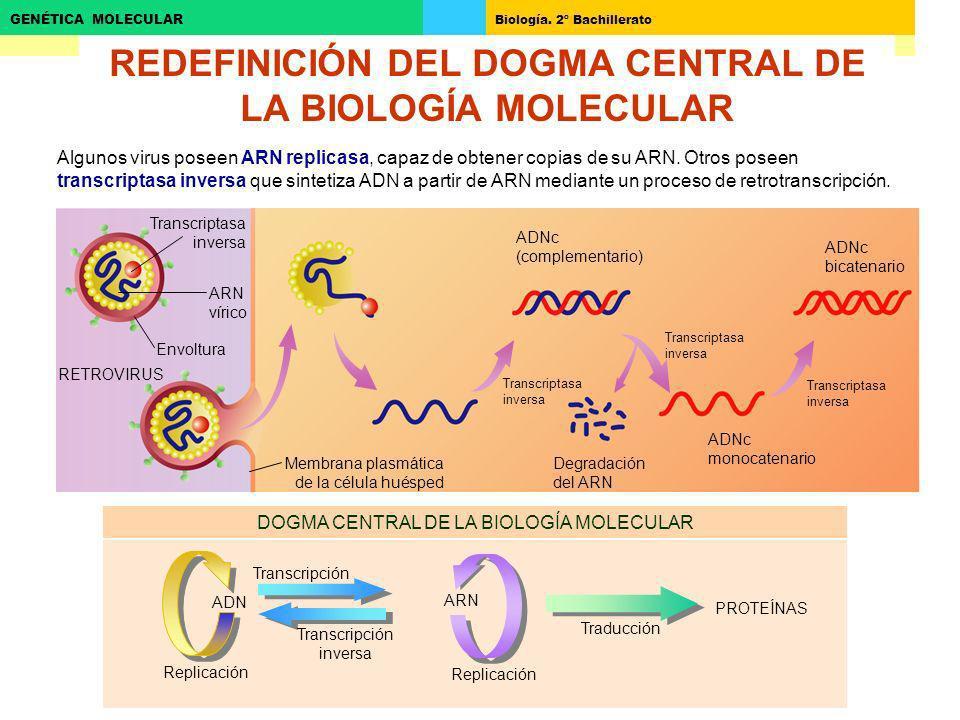 REDEFINICIÓN DEL DOGMA CENTRAL DE LA BIOLOGÍA MOLECULAR