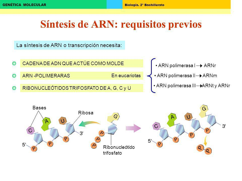 Síntesis de ARN: requisitos previos