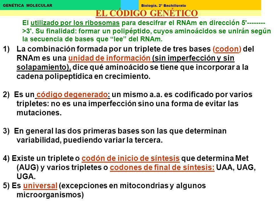 2ªposición EL CÓDIGO GENÉTICO.