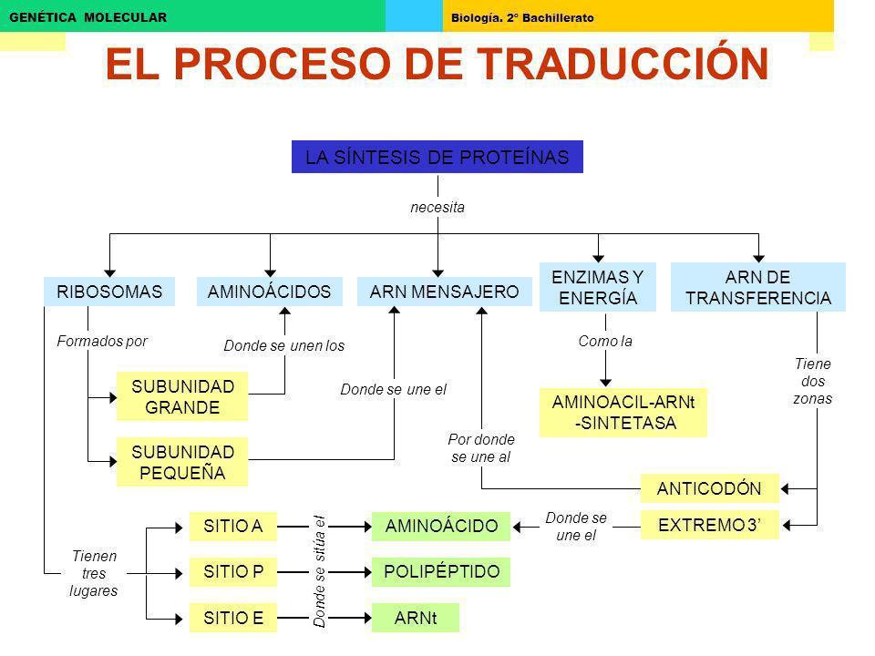 EL PROCESO DE TRADUCCIÓN