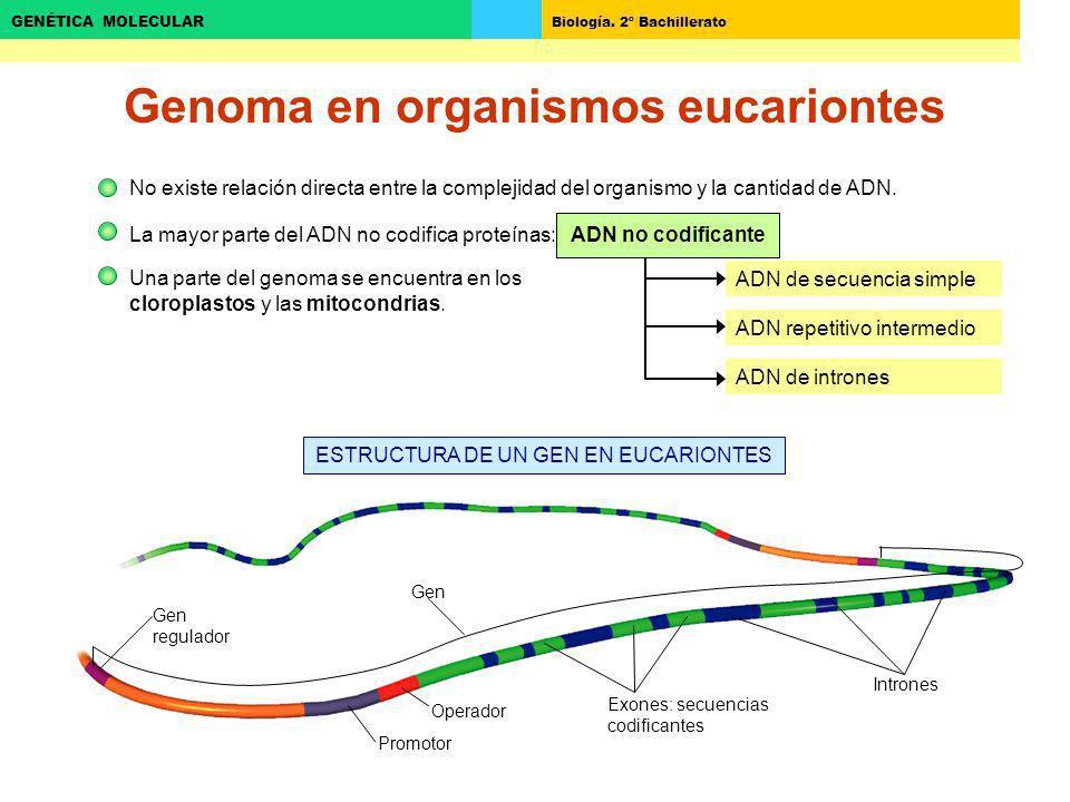 Genoma en organismos eucariontes