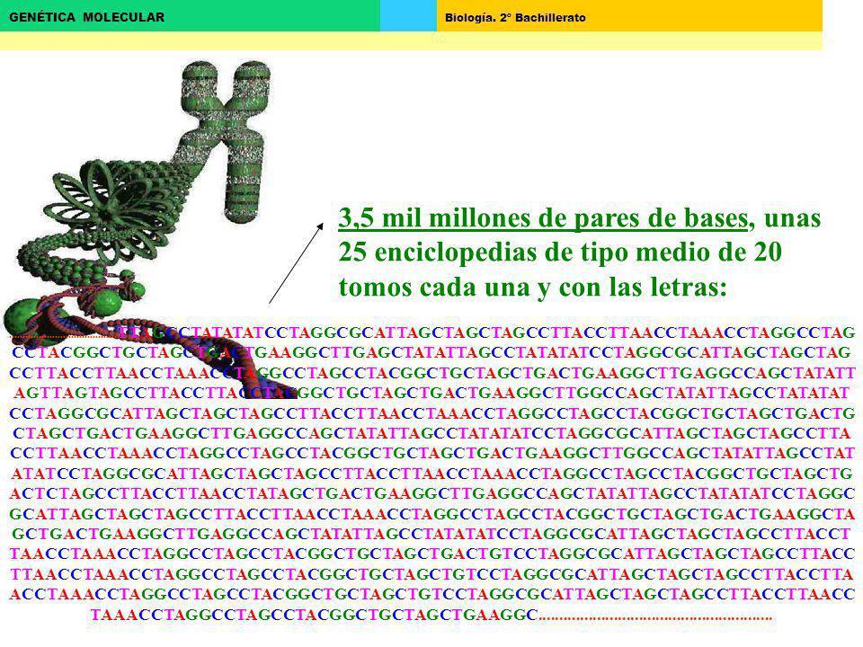 3,5 mil millones de pares de bases, unas 25 enciclopedias de tipo medio de 20 tomos cada una y con las letras: