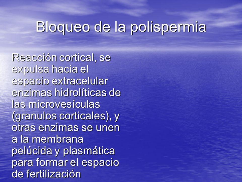 Bloqueo de la polispermia