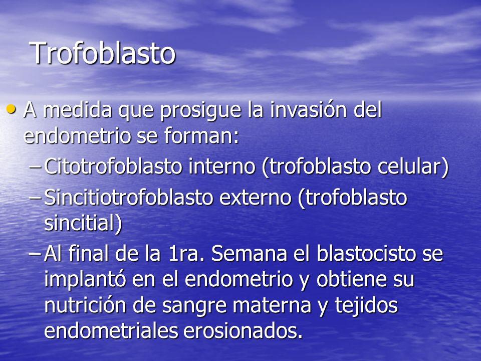 Trofoblasto A medida que prosigue la invasión del endometrio se forman: Citotrofoblasto interno (trofoblasto celular)