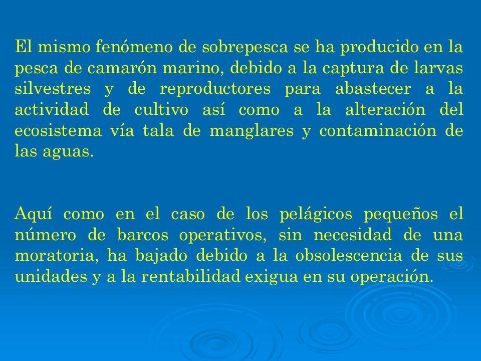 El mismo fenómeno de sobrepesca se ha producido en la pesca de camarón marino, debido a la captura de larvas silvestres y de reproductores para abastecer a la actividad de cultivo así como a la alteración del ecosistema vía tala de manglares y contaminación de las aguas.