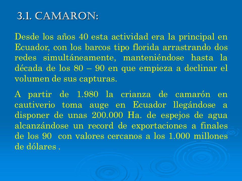 3.1. CAMARON: