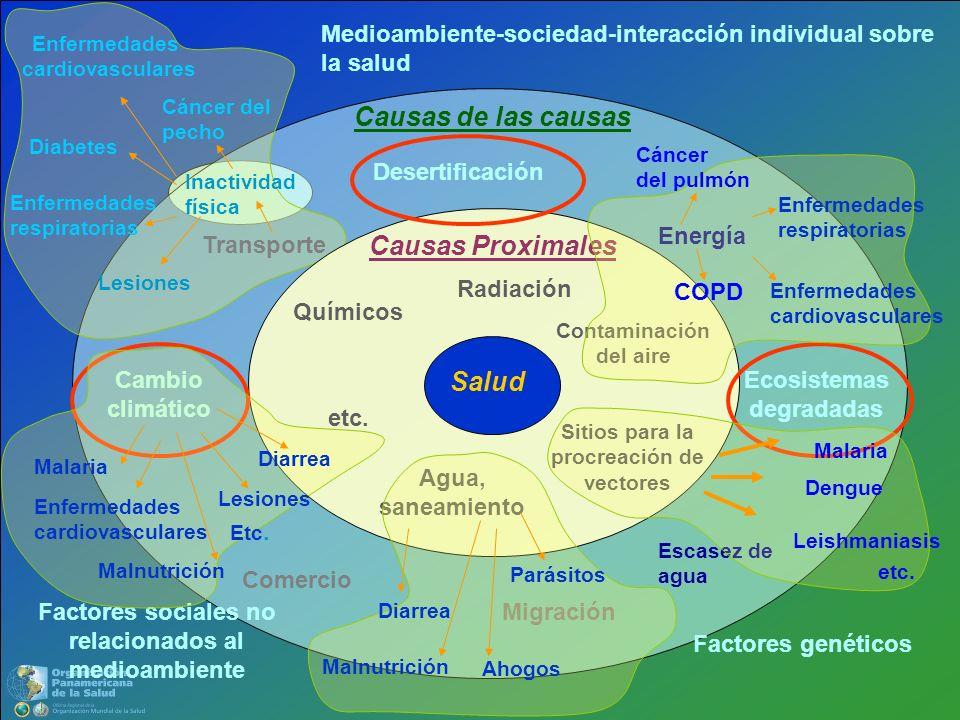 Causas de las causas Causas Proximales Salud