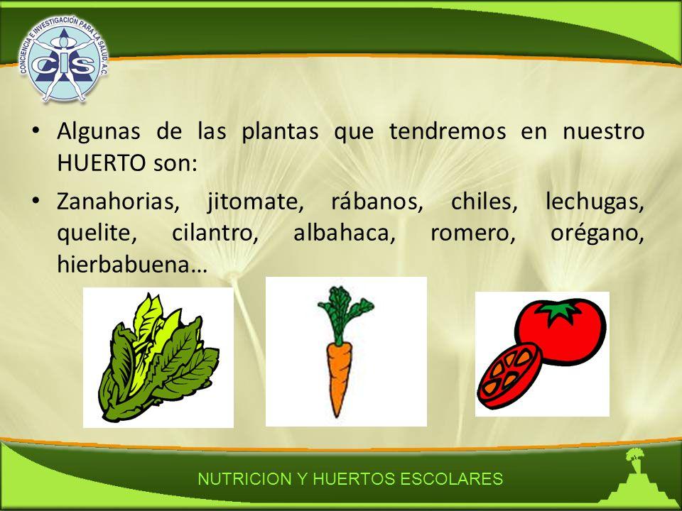 Nutricion y huertos escolares ppt descargar - Plantas de huerto ...