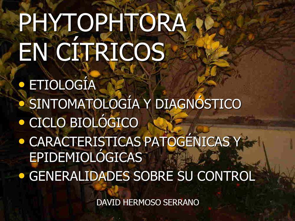 Hermosa Anatomía De Los Cítricos Festooning - Anatomía de Las ...