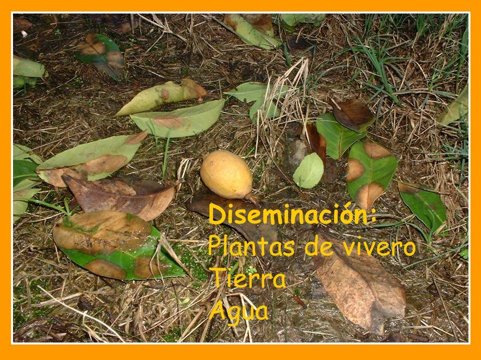 Phytophtora en c tricos ppt video online descargar for Vivero plantas online