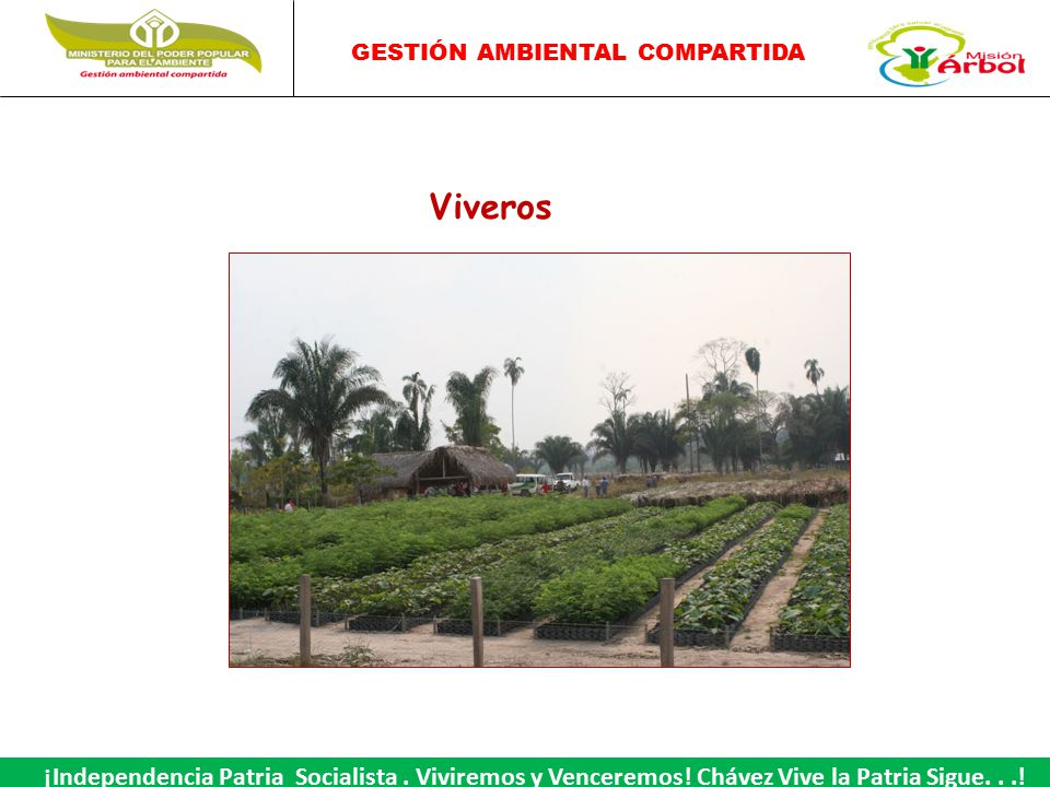 Viveros ppt video online descargar for Como iniciar un vivero
