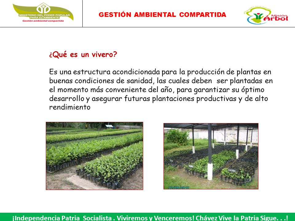 viveros ppt video online descargar