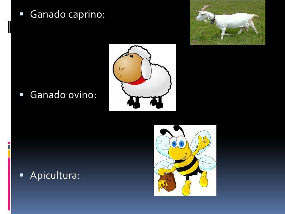 Ganado caprino: Ganado ovino: Apicultura:
