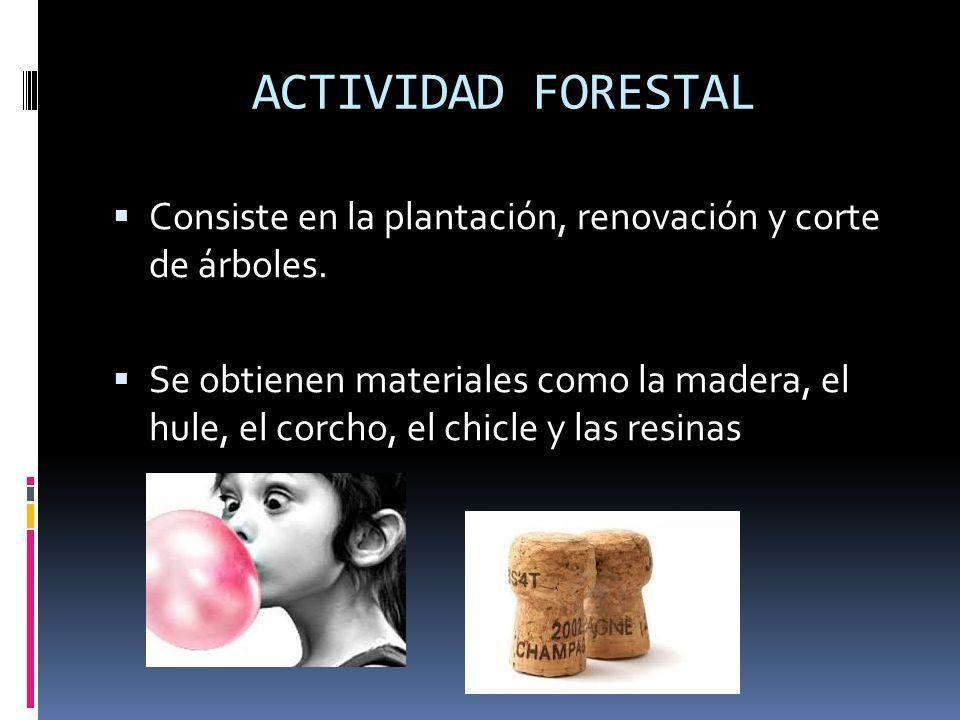 ACTIVIDAD FORESTAL Consiste en la plantación, renovación y corte de árboles.