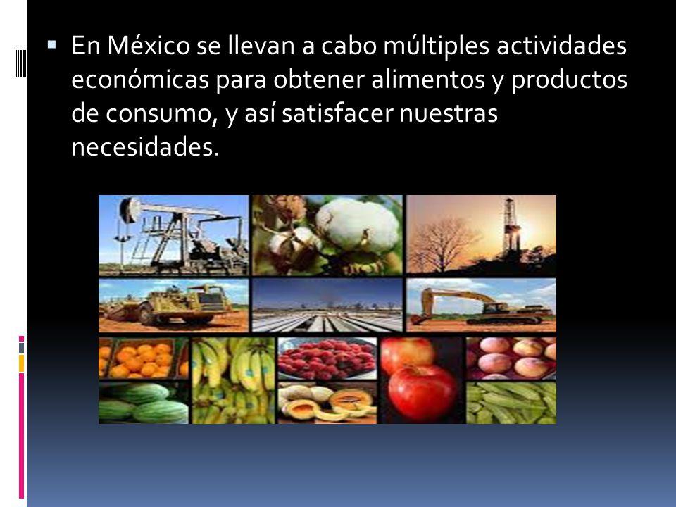 En México se llevan a cabo múltiples actividades económicas para obtener alimentos y productos de consumo, y así satisfacer nuestras necesidades.
