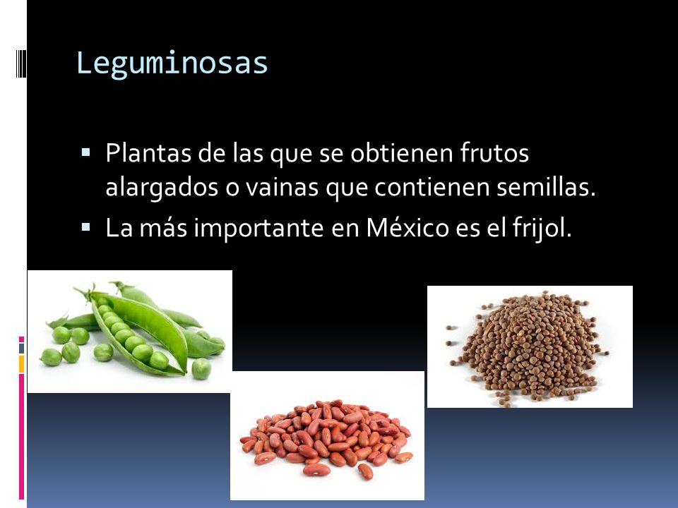 Leguminosas Plantas de las que se obtienen frutos alargados o vainas que contienen semillas.