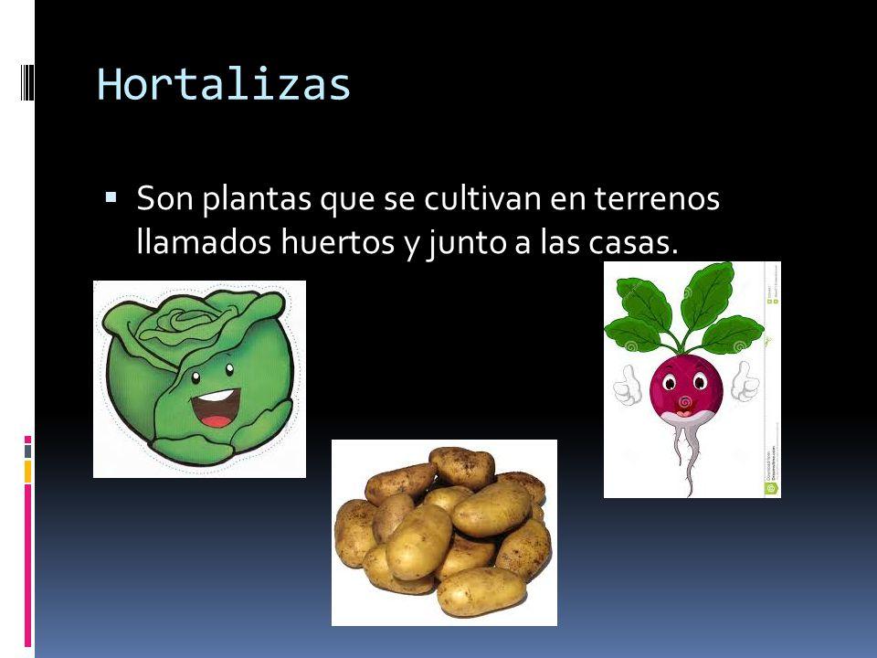 Hortalizas Son plantas que se cultivan en terrenos llamados huertos y junto a las casas.