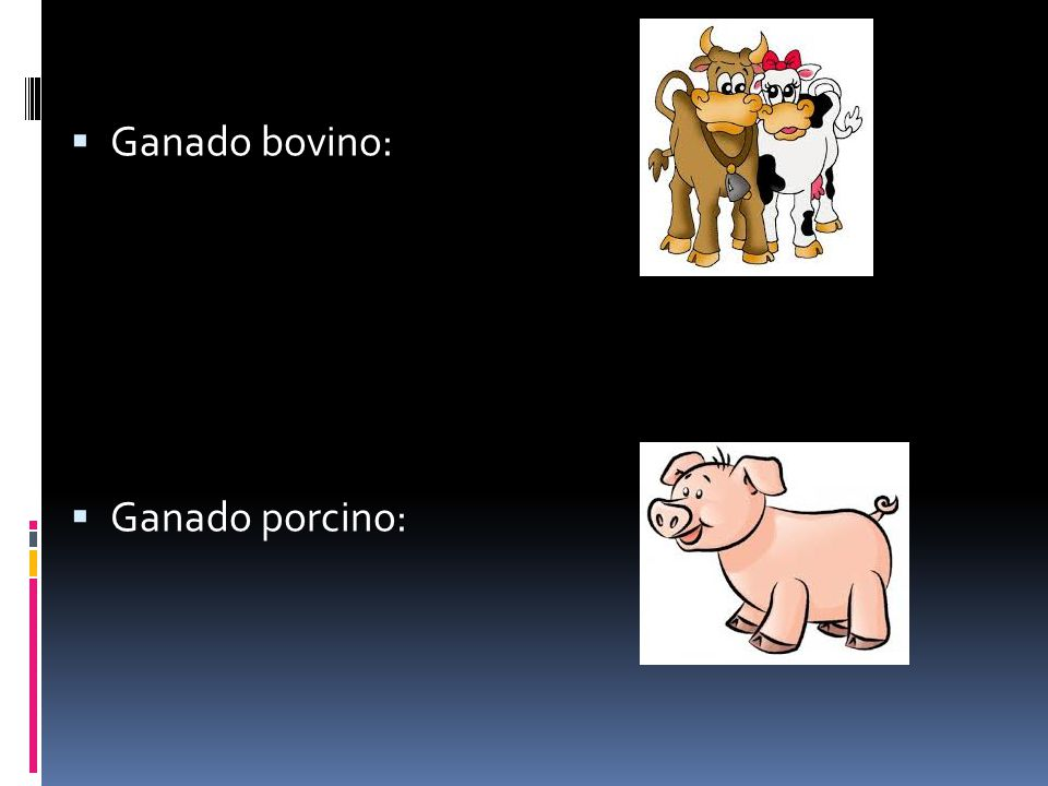 Ganado bovino: Ganado porcino: