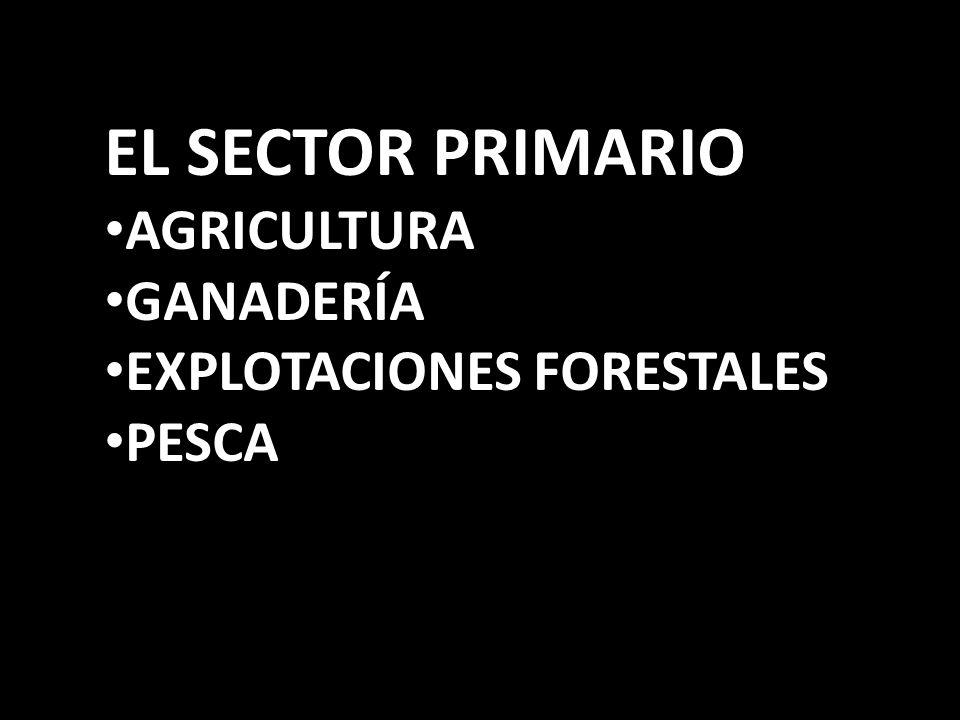 EL SECTOR PRIMARIO AGRICULTURA GANADERÍA EXPLOTACIONES FORESTALES