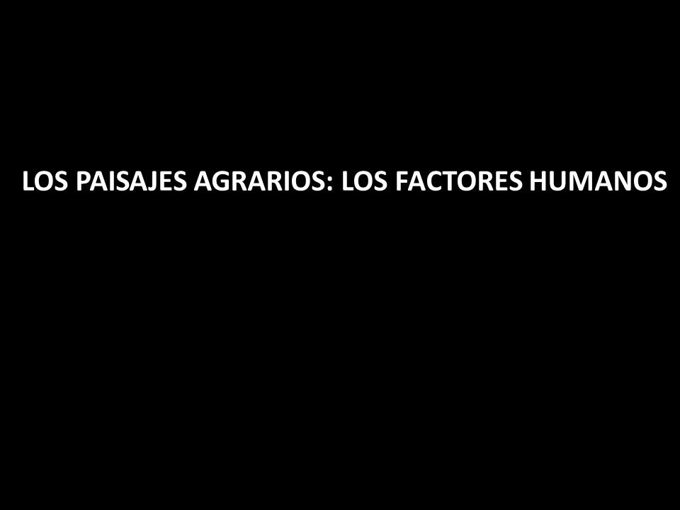 LOS PAISAJES AGRARIOS: LOS FACTORES HUMANOS