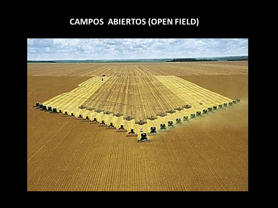 CAMPOS ABIERTOS (OPEN FIELD)