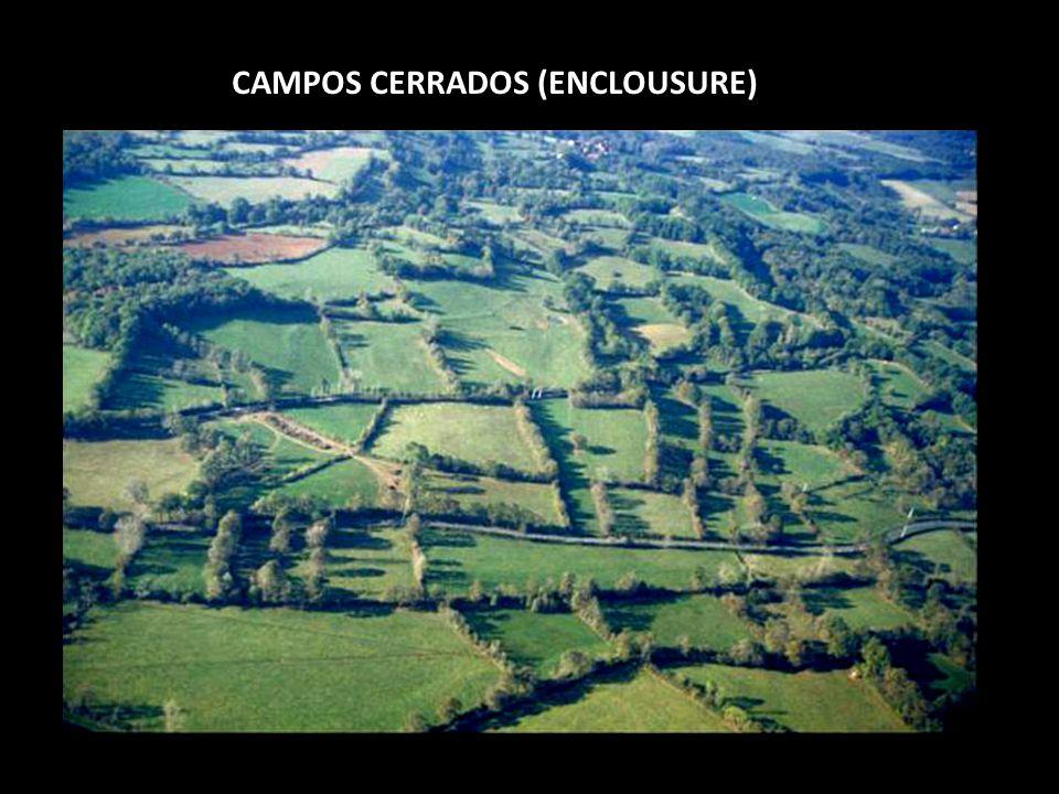 CAMPOS CERRADOS (ENCLOUSURE)