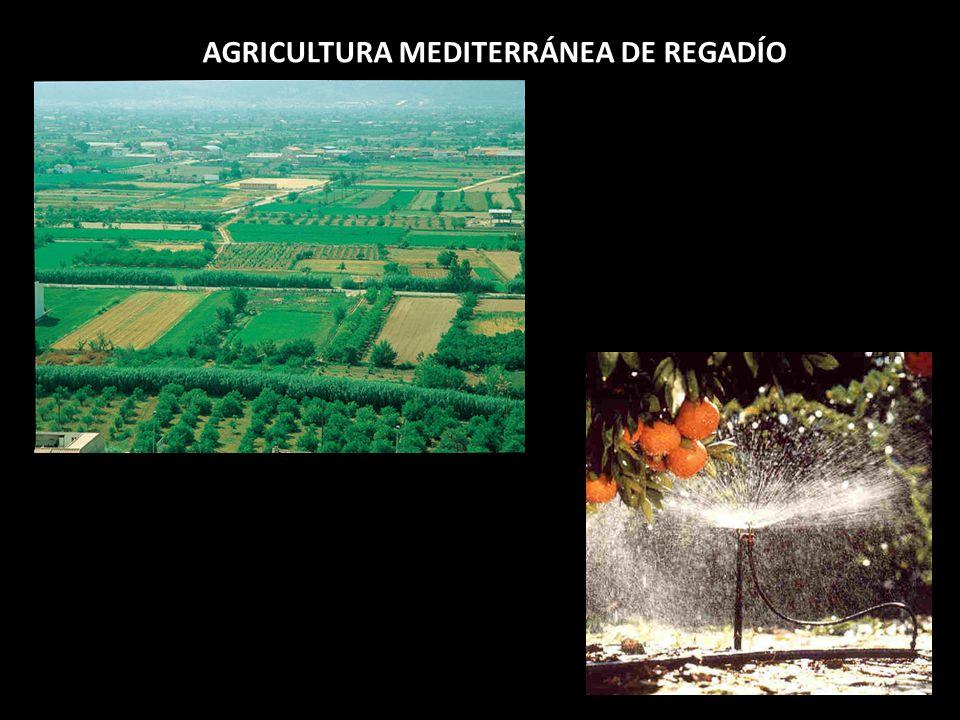 AGRICULTURA MEDITERRÁNEA DE REGADÍO