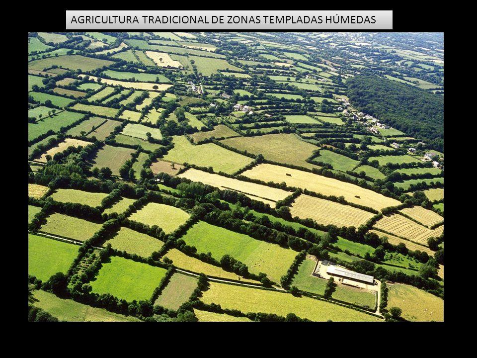 AGRICULTURA TRADICIONAL DE ZONAS TEMPLADAS HÚMEDAS