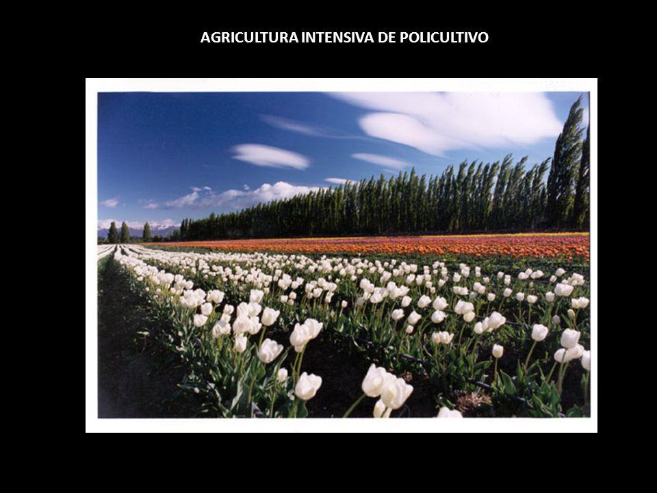 AGRICULTURA INTENSIVA DE POLICULTIVO