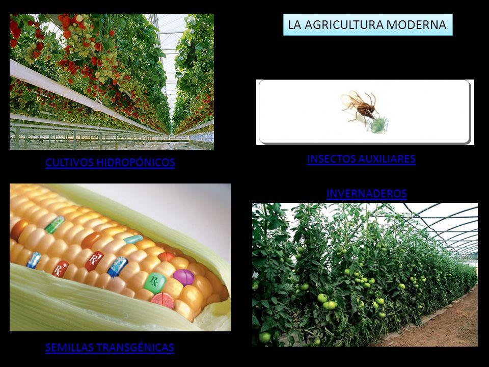 LA AGRICULTURA MODERNA